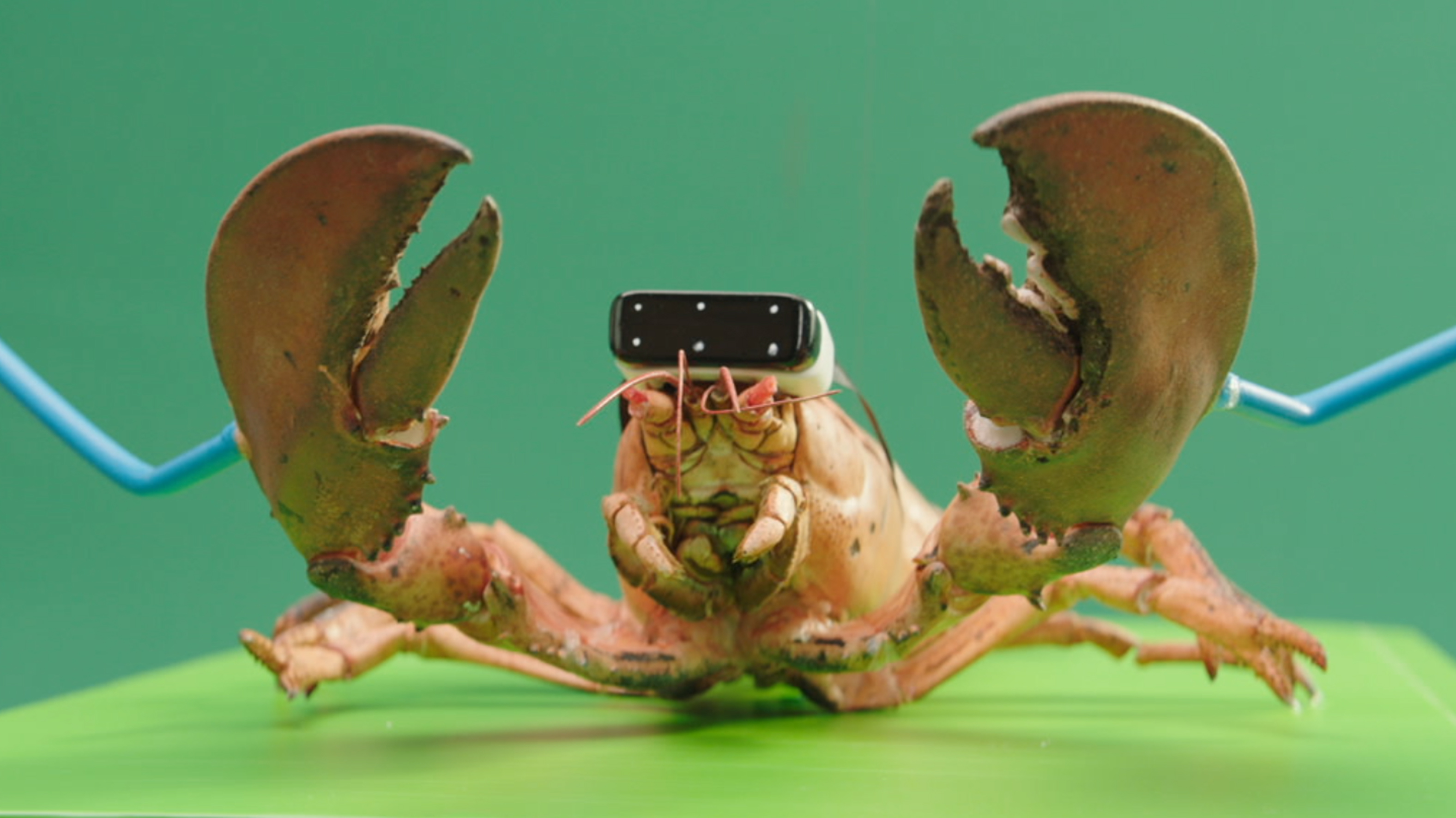 TELE2 Lobster